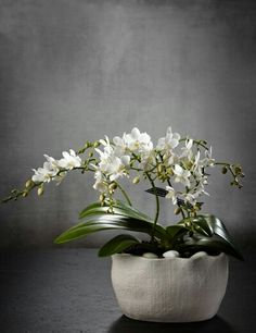 Buy the Multifloral Orchid House Plant from Marks and Spencer's range. Moth Orchid, Phalaenopsis Orchid, House Plants Decor, Plant Decor, White Orchids, White Flowers, Elegant Flowers, Beautiful Flowers, Orchid Arrangements