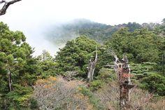 霧の舞う山々。露岩の展望台から。