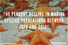 Climate Change And Overfishing Are Driving The World's Oceans To The 'Brink Of Collapse' | ThinkProgress
