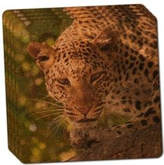 "Amazon.com: Custom & Cool {4"" Inches} Set Pack of 4 Square ""Grip Texture"" Drink Cup Coaster Made of Cork w/ Cork Bottom & Wild Safari Leopard Cat On The Prowl Nature Scene Design [Brown, Black, Green & Brown]: Home & Kitchen"