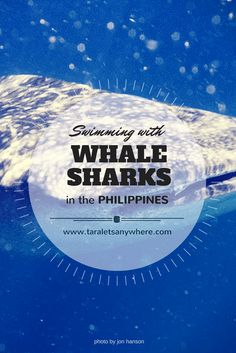 Swimming with whale sharks in the Philippines | whale sharks in Oslob | whale sharks in Donsol | sustainable animal tourism