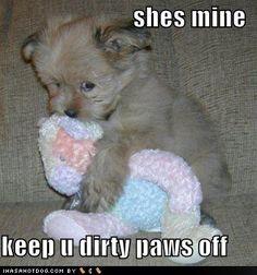 cute animal sayings - Google Search
