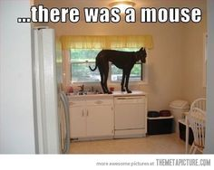 Oh, like you aren't scared of them as well!  #greatdane #dog #funnydogs