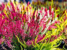 Flowers, Plants, Garden, Crochet Accessories, Plant, Royal Icing Flowers, Flower, Florals, Floral
