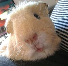 Duck face is so last year - this is the Piggy Face!