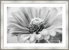 Floral Black & White.  For full size view: http://andrea-anderegg.pixels.com The watermark will NOT appear on any final product.  #artcollector #floral #homedecor #interiordesign #wallart