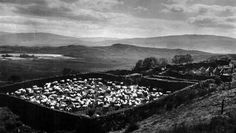 Old photograph of a sheep enclosure in Highland Perthshire, Scotland Old Photographs, Sheep, Scotland, Travel, Animals, Viajes, Animales, Animaux, Old Photos