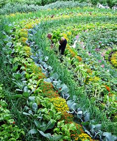 This is a picture of The Eden Project in Cornwall England. This is a polyculture design of permaculture. Conventional farming uses monoculture planting. This makes the plant more susceptible to pests and disease. (source)