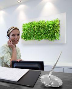 Groen in je kantoor door een life picture Live Picture, Wall Mount, Deco, Green Walls, Painting, Trends, Wall Installation, Painting Art, Decor