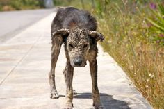 """Back in a woman in Athens, Greece spotted a dog whose face had completely hardened due to mange. Her condition would later earn her the name """"Petra"""", which is Greek for """"sto… Beautiful Dogs, Animals Beautiful, Rescue Dogs, Animal Rescue, Petra, Transformers, Animals And Pets, Cute Animals, Turn To Stone"""