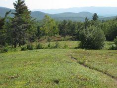 Blueberry Hill.  Vermont.