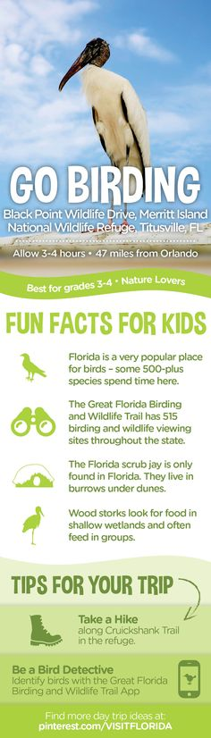 Drive the kids for seven miles along Black Point Wildlife Drive in the Merritt Island National Wildlife Refuge and spot shorebirds, as well as other wildlife from your car. You'll see alligators, roseate spoonbills, bald eagles and scrub jays, to name a few. The refuge also has walking trails. #FLdaytrips #daytrips #birding #naturelovers