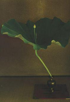 Chaque jour depuis un an, le grand maître de l'ikebana Kawase Toshiro présente une composition dans un petit vase ancien.