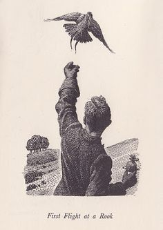 First Flight at a Rook from My Country Book by Charles Tunnicliffe