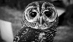 Myers Briggs (MBTI) Spirit Animals; intp-owl. Regardless of mbti, the owl is my spirit animal anyway