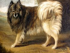 Keeshond History: The Prince of Wales, later King George IV, had a Keeshond which was depicted in this wonderful painting, thought to be by Thomas Gooch 1750-1802. The prince gave the picture to the first marchioness Conyngham, who was his last mistress. She lived at Slane Castle, Co. Meath in Ireland, where the painting is still owned by the descendants of the Marchioness, Earl of Mount Charles, Slane Castle.