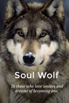 Prologue It was a stormy night when a werewolf family was eating away in their cozy home.Everything was normal until suddenly a group of werewolf hunter tracked and attacked the unnatural family.The beastly animals transformed them self.They ran for their