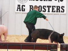 that looks a lot like the 4-H pig i am raising :)