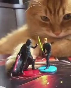 Proof that cats belong to the dark side Credit@thebaksy #starwars #darthvader #lukeskywalker #cat #cute Silly Memes, Funny Memes, Anime Pictures, Cat Biting, Funny Video Clips, Cat Gif, Offensive Memes, Edgy Memes, Best Memes