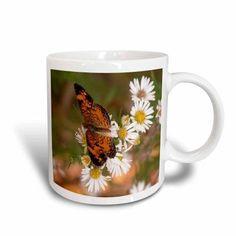 3dRose Monarch Butterfly on wild daisies, Ceramic Mug, 11-ounce