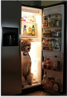 PetsLady's Pick: Funny Refrigerated Dog Of The Day...see more at PetsLady.com…