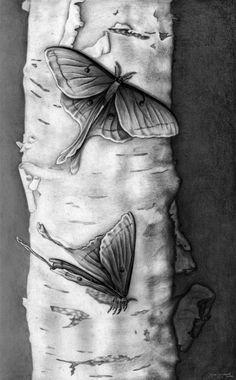 Done for my Drawing for Scientific Illustration class. Arm Tattoo, Sleeve Tattoos, Tattoo Art, Ink Illustrations, Illustration Art, Luna Moth Tattoo, Ink Art, Spirit Animal, Art Inspo