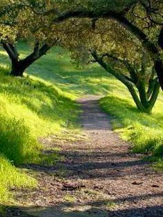 Haladj nyugodtan a lárma és sietség közepette, és emlékezz arra a békére, ami létezhet a csöndben. Elidegenedés nélkül, élj úgy, hogy jó kap...