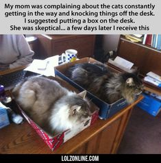 My Mom Was Complaining About The Cats Constantly#funny #lol #lolzonline