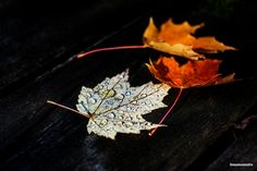 The fall colors are almost done. Canada North, Ottawa Ontario, North America, Colors, Fall, Autumn, Fall Season, Colour, Color