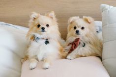 Follow these simple tips to capture gorgeous insta-worthy photos of your dog like a pro!