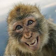 animales sonriendo - Buscar con Google