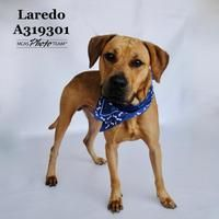 Available Pets At Montgomery County Animal Shelter Tx In Conroe