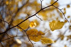 秋天的颜色-2 | Flickr – 相片分享!