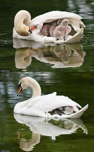 what a good mommy