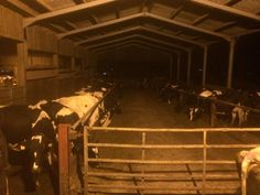 Morning milking! #farm24