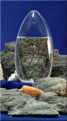 EcoSphere® is the world's first totally enclosed ecosystem - a complete, self-contained and self-sustaining miniature world encased in glass.