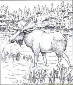 Free Coloring Pages Moose – Bing Images Make your world more colorful with free printable coloring pages from italks. Our free coloring pages for adults and kids. Animal Coloring Pages, Coloring Book Pages, Coloring Sheets, Animal Drawings, Pencil Drawings, Wood Burning Patterns, Digi Stamps, Printable Coloring, Pyrography