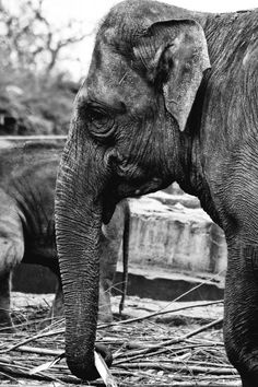 nature is the most beautiful art there is #photografie #art #elephant
