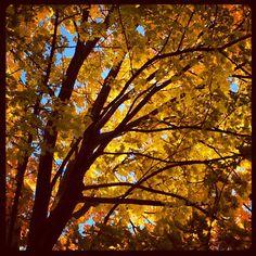 blue & yellow #blue #yellow #nature #autumn #fall #photography