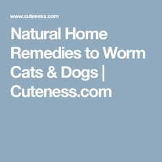 Natural Home Remedies to Worm Cats & Dogs | Cuteness.com