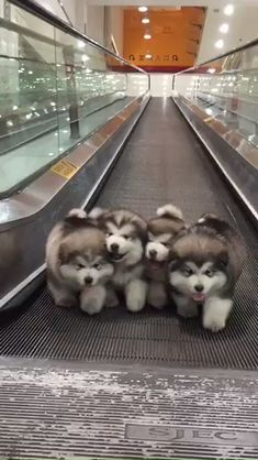 Untitled Baby Animals Pictures Cute Dogs And Puppies Cute Animals