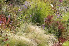 Galeria zdjęć - Magiczne ogrody z trawami - Ogrodowisko