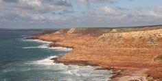 Photo guide to Australian geckos - WA coastline