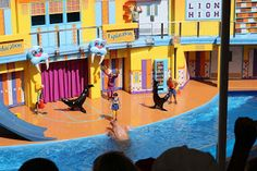 We recently saw the hilarious new Sea Lion show at SeaWorld Orlando. Clyde and Seamore's Sea Lion High show is a really entertaining High-. Disney Travel, Disney Trips, Seaworld Orlando, Sea World, Travel Tips, Lion, Fair Grounds, Entertaining, Outdoor Decor