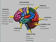 rain Injury: Basic Facts More than five million people in the United States live with the after-effects of brain injury. About million people sustain new brain injuries each year. Brain Stem, Brain Science, Science Education, Physical Education, Nursing School Notes, Ob Nursing, Nursing Schools, Brain Facts, Facts About The Brain
