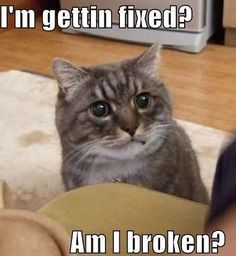 funny animals with captions - Google Search
