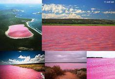 el lago rosa de australia