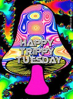 Happy Trippy Tuesday good morning tuesday tuesday quotes good morning quotes…