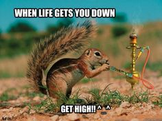 dogs that get high with captions | ... Get high!! ^_^ - when life gets you down Get high!! ^_^ weed squirrel