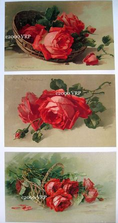Print FREE SHIP 3 Prints Cabbage Roses by VictorianRosePrints